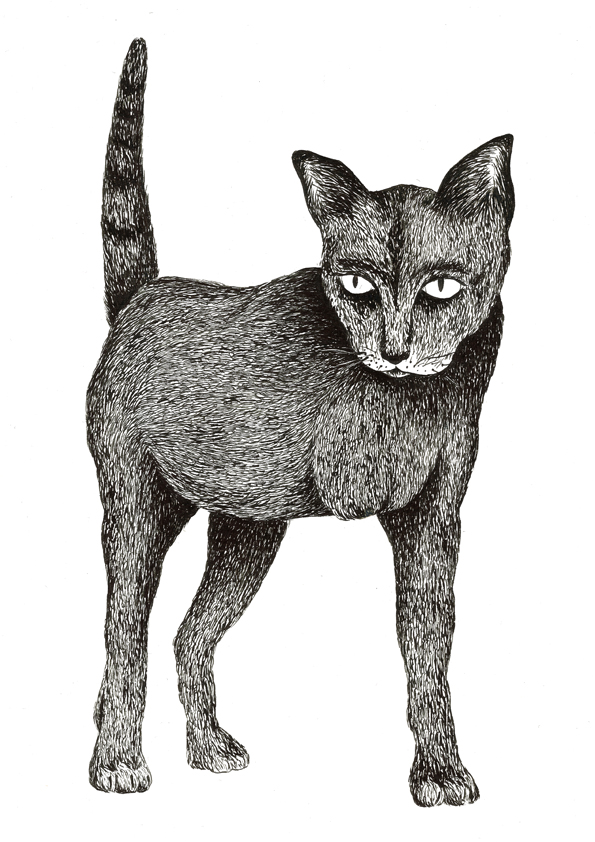 Maldo_cat