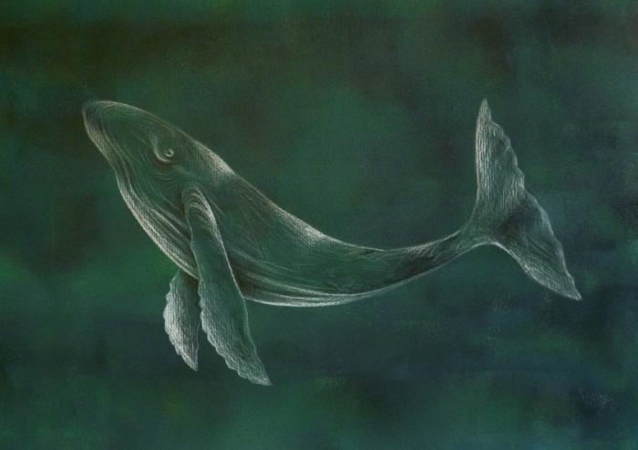 Maldo_whale